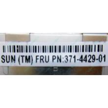 Серверная память SUN (FRU PN 371-4429-01) 4096Mb (4Gb) DDR3 ECC в Волгограде, память для сервера SUN FRU P/N 371-4429-01 (Волгоград)