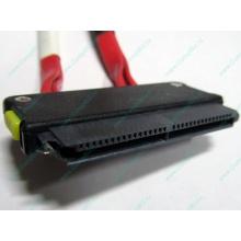 SATA-кабель для корзины HDD HP 451782-001 459190-001 для HP ML310 G5 (Волгоград)
